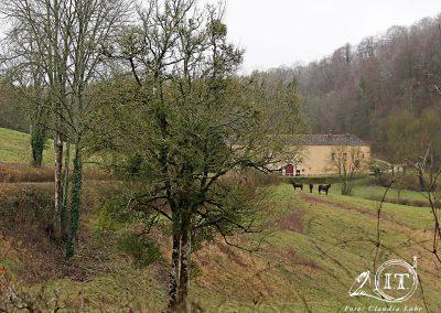 2020-02-001-Bayerische-Jungwoelfe-Initiative-Trompe-Burgund