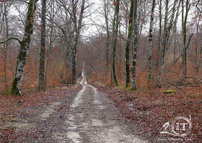 2020-02-18-Bayerische-Jungwoelfe-Initiative-Trompe-Burgund.jpg